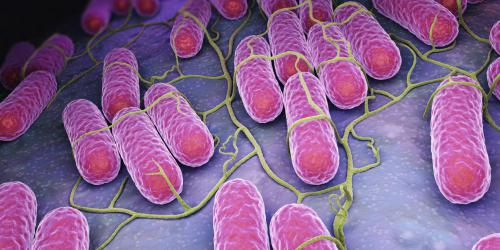 Salmonelles : 180 000 infections par an